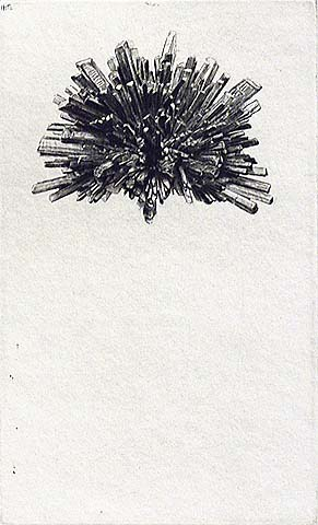 Antimonite Star - JAKOB DEMUS - diamond drypoint