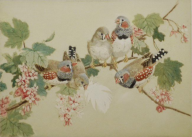 Zebra Finches - WINIFRED AUSTEN - aquatint printed in colors