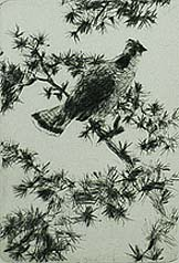 Grouse on a Pine Bough - FRANK BENSON - drypoint