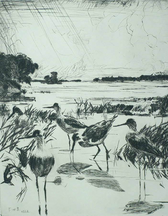 Yellowlegs in Sunlight - FRANK BENSON - drypoint