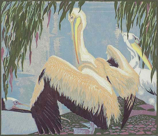 Pelicans - JESSIE ARMS BOTKE - woodcut printed in colors