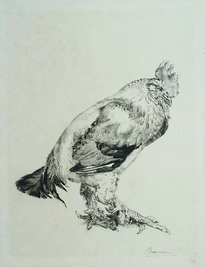 Le Vieux Coq (The Old Cock) - FELIX BRACQUEMOND - etching