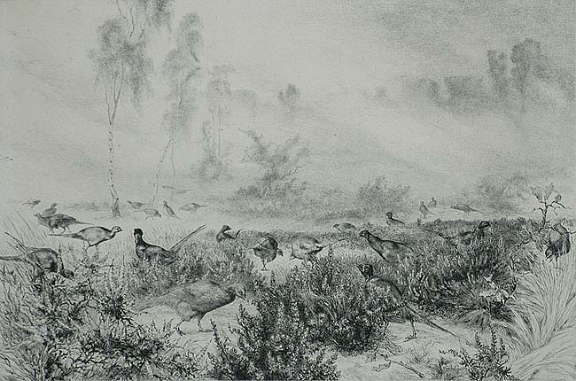 Brumes du Matin (Mists of the Morning) - FELIX BRACQUEMOND - etching