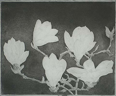 Magnolia (IB) - CHARLES DONKER - etching and aquatint