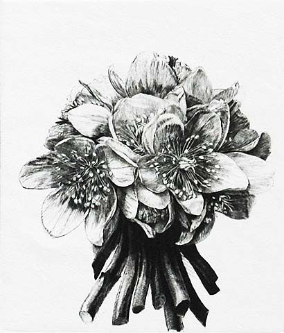 Christmas Roses Once Again - JAKOB DEMUS - diamond drypoint