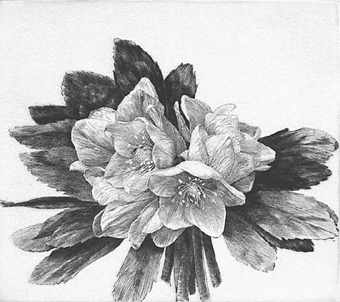The Final Christmas Roses - JAKOB DEMUS - diamond-drypoint