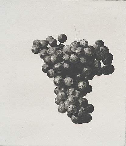 The Grapes of Bacchus - JAKOB DEMUS - diamond drypoint