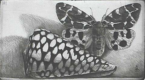 Rembrandt Shell and Tiger Moth - JAKOB DEMUS - diamond drypoint