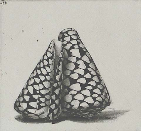 Two Rembrandt Shells - JAKOB DEMUS - diamond drypoint