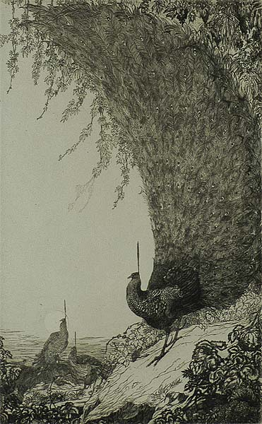 Peacocks (upright plate) - CHARLES M. & EDWARD J. DETMOLD - etching