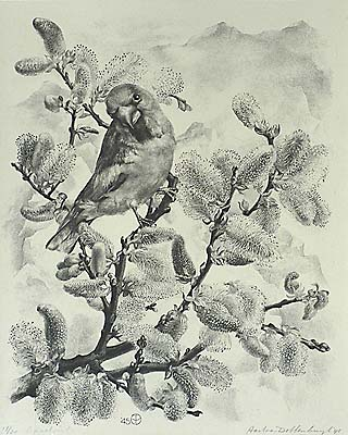 Appelvink (Apple Finch) - AART VAN DOBBENBURGH - lithograph