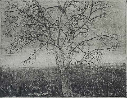 Beuk (Beech Tree); also called Kale Beukenboom (Bare Beech Tree) - CHARLES DONKER - etching and aquatint
