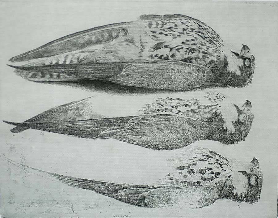 Three Tree Falcons (Drie Boomvalken) - CHARLES DONKER - etching