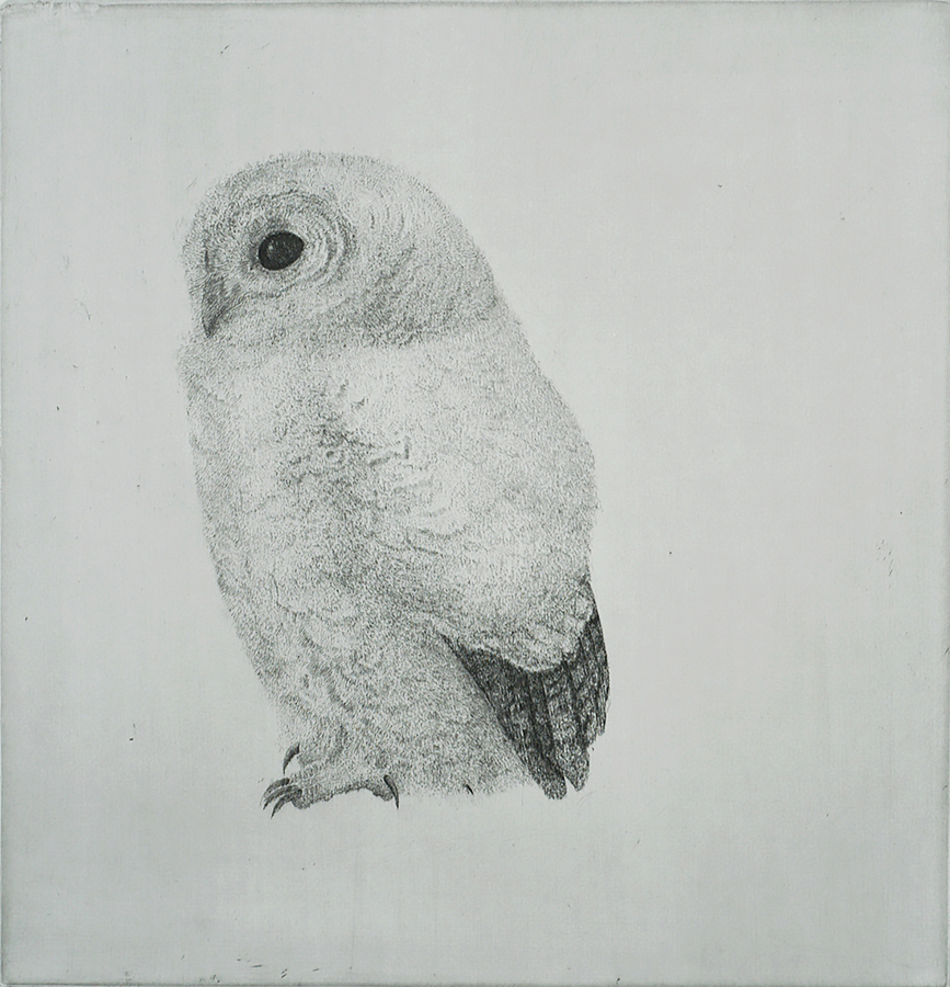 Young Tawny Owl (Jonge Bosuil) - CHARLES DONKER - etching