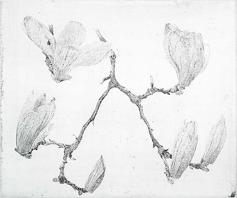Magnolia II - CHARLES DONKER - etching