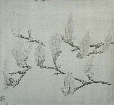 Magnolia III - CHARLES DONKER - etching