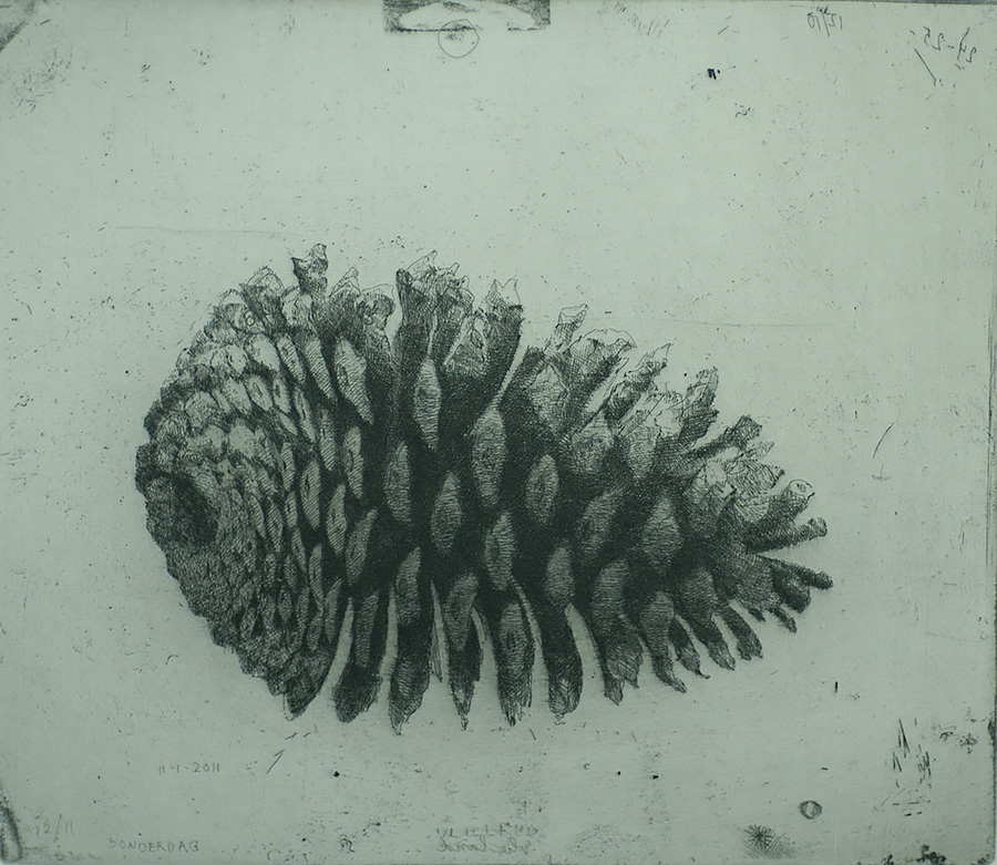 Grote Dennenappel II (Large Pine Cone II) - CHARLES DONKER - etching