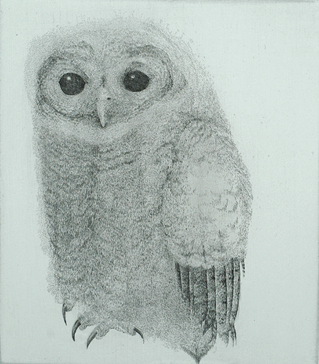 Tawny Owl (Bosuil) - CHARLES DONKER - etching