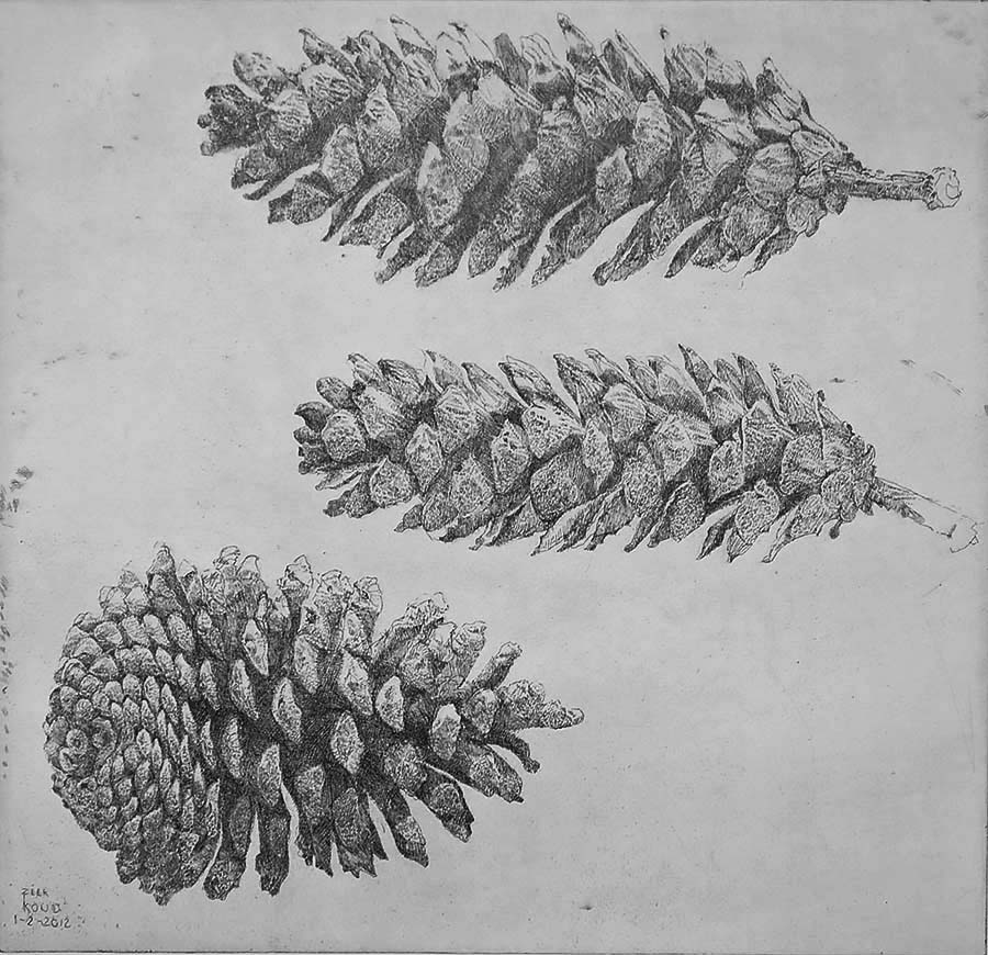 Dennenappel en twee Sparappels (Pine Cone and two Fir Cones) - CHARLES DONKER - etching