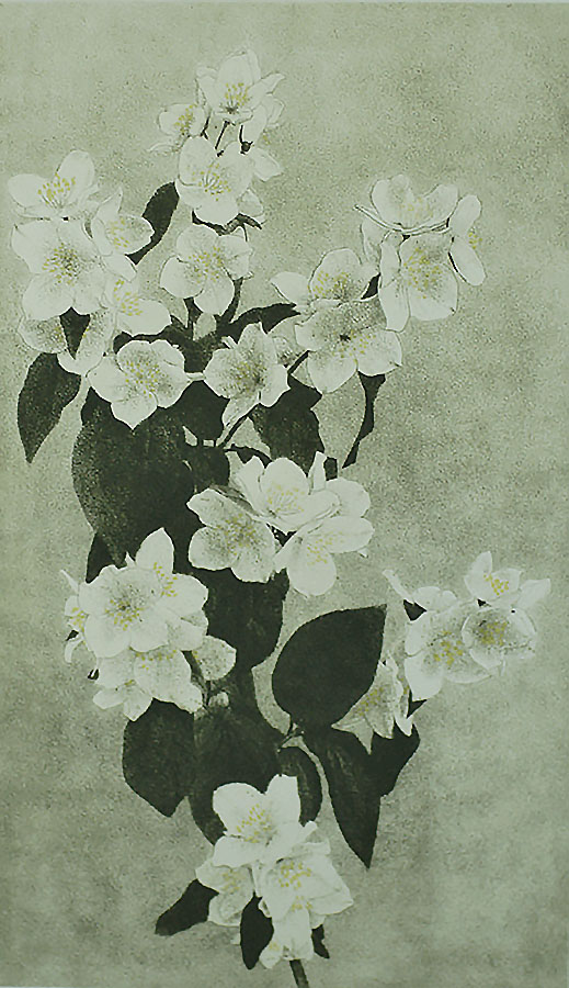 Apple Blossoms - DIRK HARTING - etching and aquatint printed in colors