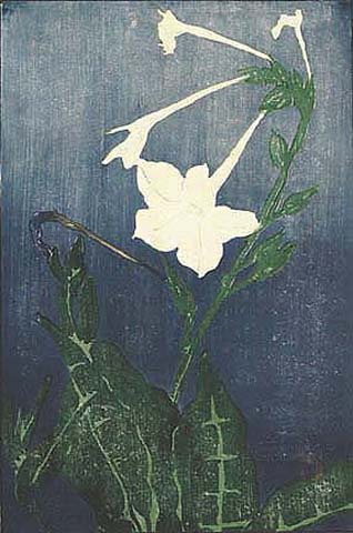 Nicotiana - EDNA BOIES HOPKINS - woodcut printed in colors