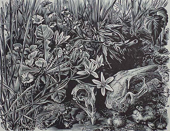 Dierenschedels op Grasgrond (Animal Skulls in the Meadow) - DIRK VAN GELDER - wood engraving