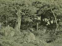 Oak Tree Growing Among the Rocks (Le Chene de Roche) -  ROUSSEAU