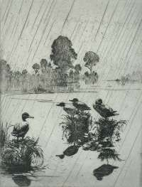 Ducks in the Rain -  BENSON