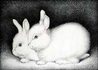 Two Rabbits -  WITTENBERG