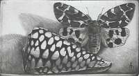 Rembrandt Shell and Tiger Moth -  DEMUS