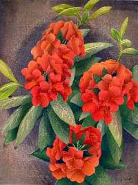 Rhododendron -  RIST