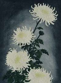Chrysanthemums -  THIEMANN