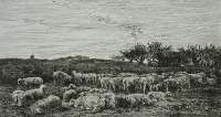 Field of Sheep, Morning (Parc a Moutons, Le Matin) -  DAUBIGNY