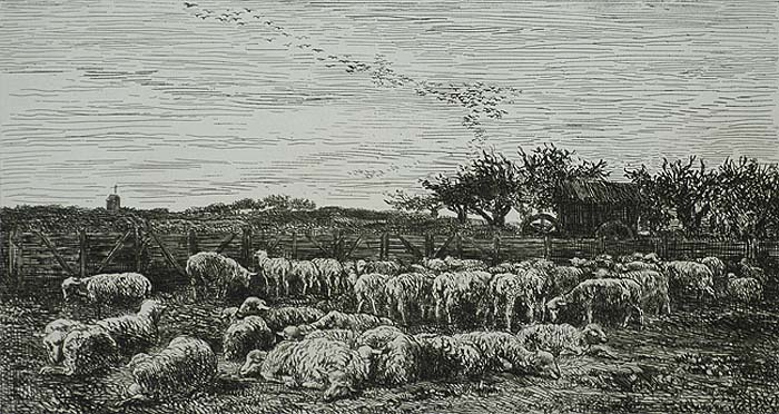 Field of Sheep, Morning (Parc a Moutons, Le Matin) - CHARLES-FRANCOIS DAUBIGNY - etching