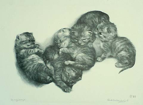 Five Kittens - AART VAN DOBBENBURGH - lithograph