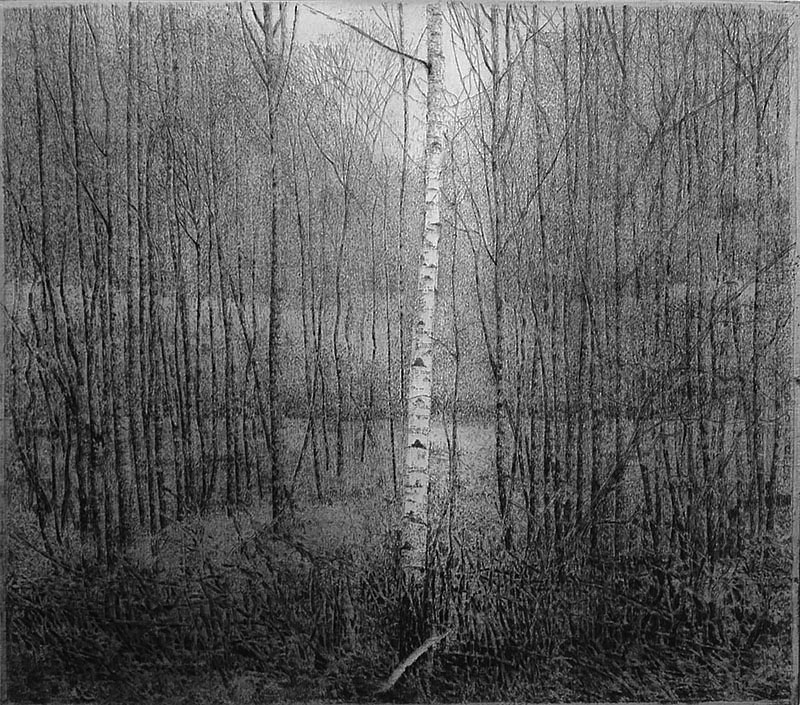 Berk Midden in Bos (Berk I) (Birch in the Middle of the Forest) - CHARLES DONKER - etching