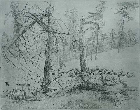 Bos V - CHARLES DONKER - etching