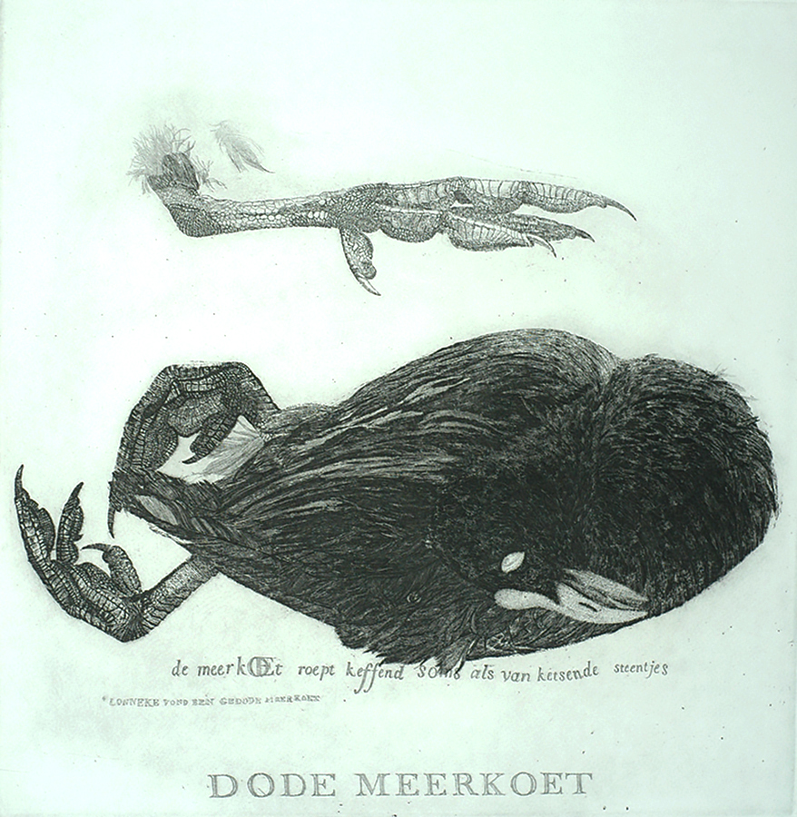 Dead Coot (Dode Meerkoet) - CHARLES DONKER - etching