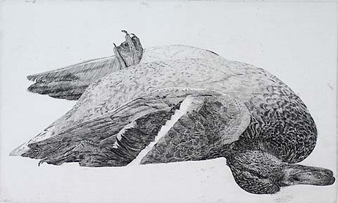 Dead Duck - CHARLES DONKER - etching