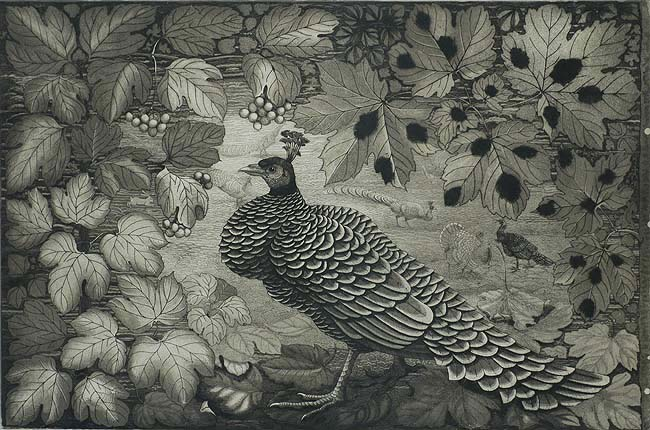 Peacock in a Landscape - ROELF GERBRANDS - etching