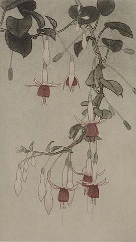 Hanging Fuchsia - DIRK HARTING - etching and aquatint printed in colors