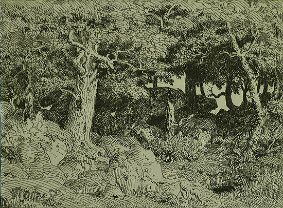 Oak Tree Growing Among the Rocks (Le Chene de Roche) - THEODORE ROUSSEAU - etching
