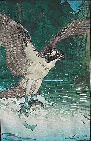 Osprey - ALLEN W. SEABY - woodcut printed in colors