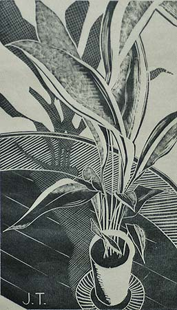 Aspidistra - JOHN TANDY - wood engraving