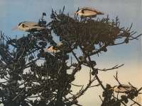 Heron Nests -  RICH