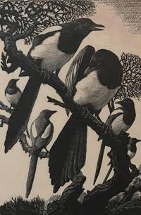 Pica and his Family -  TUNNICLIFFE