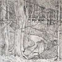 In the Woods -  TOOROP