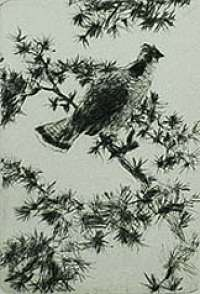Grouse on a Pine Bough -  BENSON